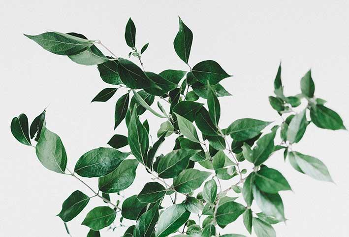 Come impiegare le piante curative dei fitoterapici